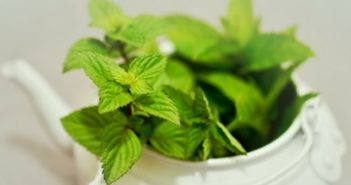 herbs for babies