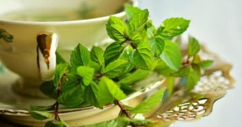 herbal teas for nausea during pregnancy
