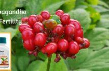 ashvagandha for fertility