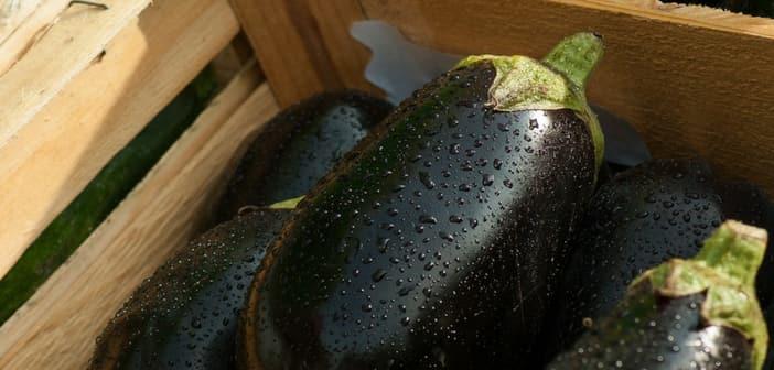 eggplants for pregnant women