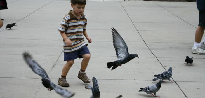 kids playing with birds