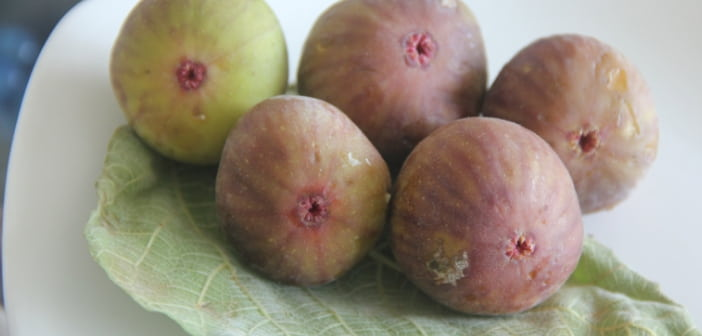 anjeer or figs for babies