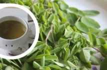 moringa leaves soup