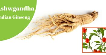 ashwgandha aka indian ginseng
