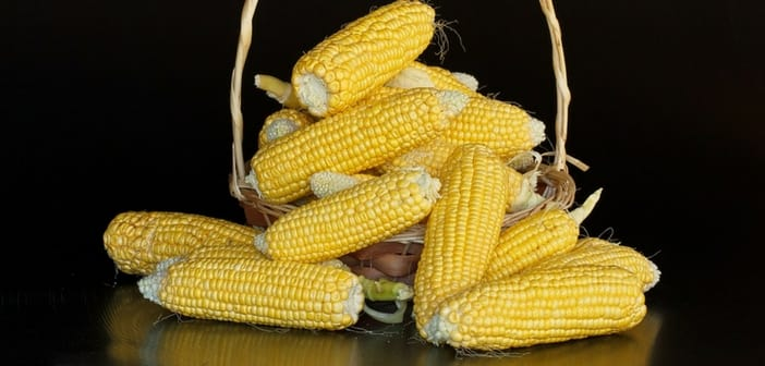 can i eat corns during pregnancy