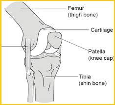 knee part